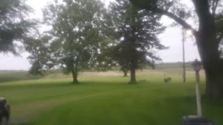 Deer roaming in the back yard