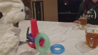 Budgie loves to play with his girlfriend