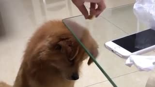 Have you tried this with your dog? Is this like an IQ test?