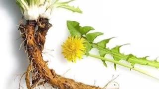 Kidney healthy herbs