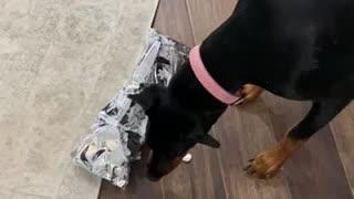 Ellie opening her present