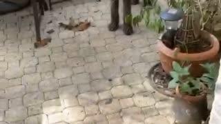 Puppy verses dog standoff! 😂😂😂