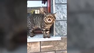 cats speaking better than their owners