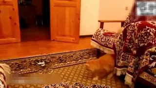 funny cats : compilation