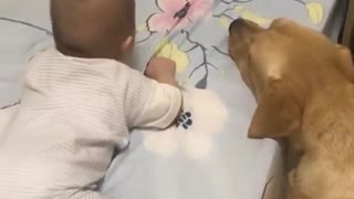 Adorable Labrador Dog Caring For Newborn Baby Will Gives You Positive Vibes