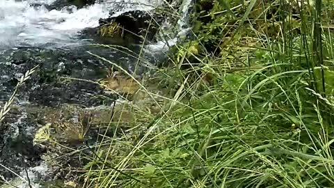Nature, Rivers, Peacfull sounds Bosnia