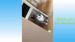 FUNNY CATS COMPILATION MEOWW