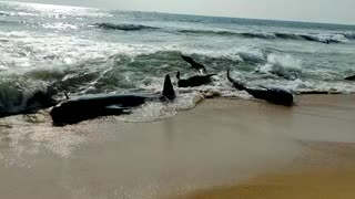 Whale rescue mission