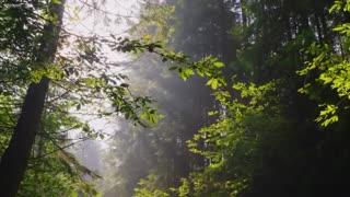 Beautiful Relaxing Music Peaceful Piano Music & Guitar Music Sunny Mornings by Peder B. Helland