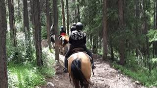 Horses Ride Banff Alberta Canada