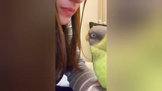 Clever parrot learns to whistle, absolutely enjoys it
