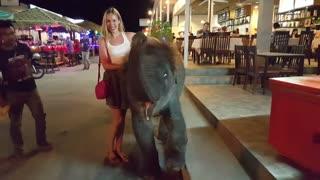 Cute Baby Elephant with my Girlfriend