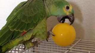FUNNIEST PARROTS - Cute Parrot And Funny Parrot Videos