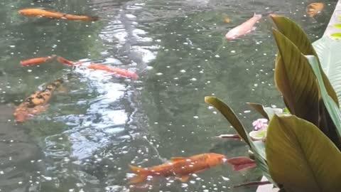 RAINBOW Pet Fishes