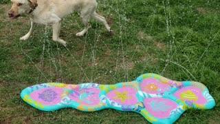 Dog playing water game