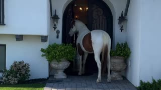 Horse Charlie gives house and barn tour