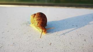 Magic snail