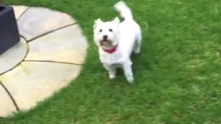 Dog Doesn't like Seeing Herself