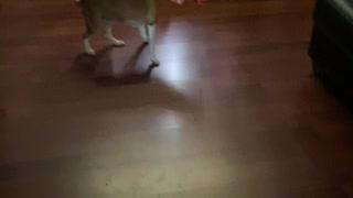 Dog stuck in box