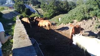Beautiful Horses 1