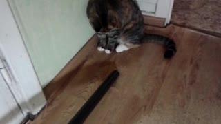 The cat versus the vacuum cleaner