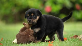 Puppies, dogs frieship