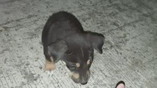 Puppy Love Part 1