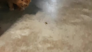 Frog Saved From Curious Cat