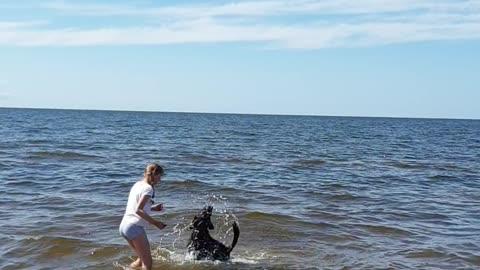 Dog at sea!