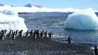 Penguins Beach Party