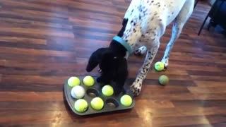 This Clever Dog Loves Solving Puzzles For Treats