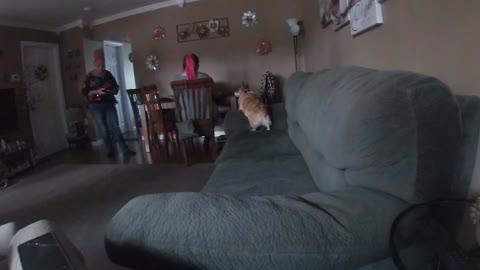 Corgi getting some treats