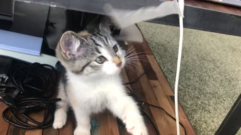 Cat scratching on a tape