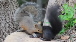 2 Squirrels having a snack and some fun. CUTE!!!!