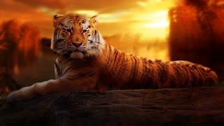 Tigers Mirage Theme 1