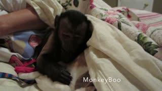 Sleepy Monkey Cuddles With Family Dog Before Bed