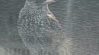 Bird taking food from car