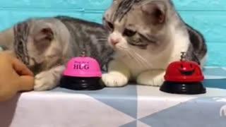 Cat ringing