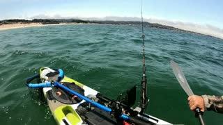 Great white Shark and Kayaker