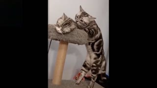 Cute little kittens playing