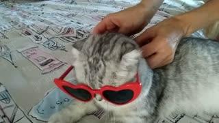 Leeloo loves glasses