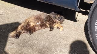 Mama Cat relaxing after voting for @catturd for President