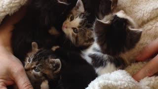 Kittens kittens kittens!!!