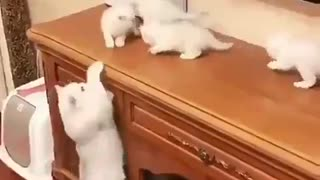 Cat Family Romantic scene 2021 Mom with childrens