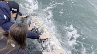 Gray Whale Comes in Close