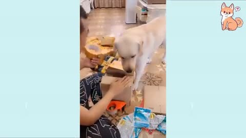 You will laugh at all the DOGS 🤣 Funny DOG Videos 😂🐶