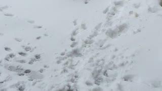 Baby loves snow!!!