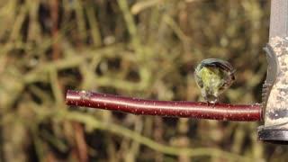 Hungry Bird Finds food Locker