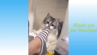 Funny Cats Videos | Animal Planet
