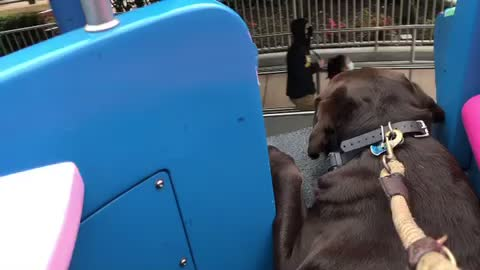 Service dog enjoys universal ride